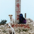 montgo with dogs 2